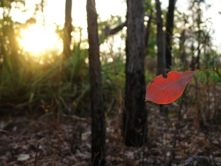 Arnhemland, Australia 2013