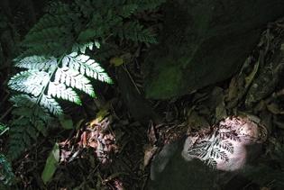 Hinawai Reserve, Banks Peninsula, South Island, New Zealand 2013