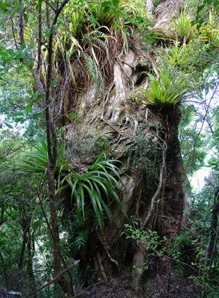 Abel Tasman National Park, South Island, New Zealand 2013