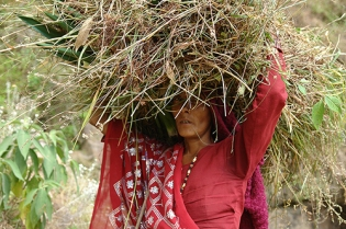 Kumaon, Uttarakhand, India 2013