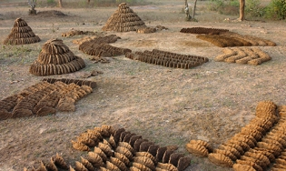 Drying cow dung, Futera, Orchha M.P., India 2009