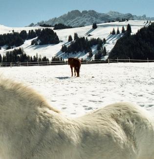 Villars-sur-Ollon, Switzerland 2001