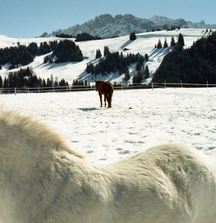 Villars-sur-Ollon, Switzerland 2001